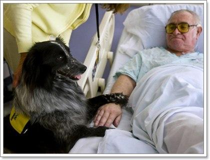 Dogilike.com :: ให้สุนัขพบคนไข้ในโรงพยาบาล ช่วยบำบัดหรือช่วยระบาด?