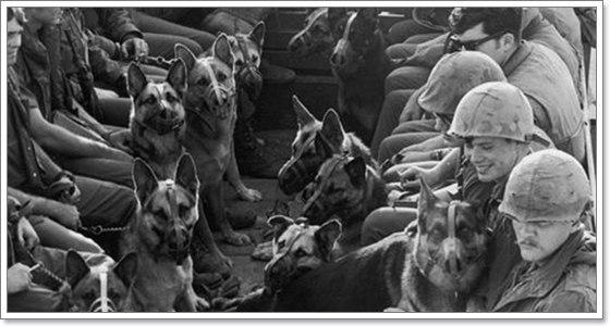 Dogilike.com :: ย้อนรอยการระบาดของโรคมรณะในสุนัข