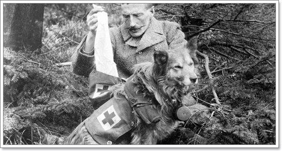 Dogilike.com :: การค้นพบอันยิ่งใหญ่วงการแพทย์ ที่มีน้องหมาเป็นพระเอก