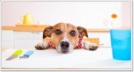 Dogilike.com :: 5 โรคน่าสนใจในน้องหมา จากรายงานสุขภาพประจำปี 2015