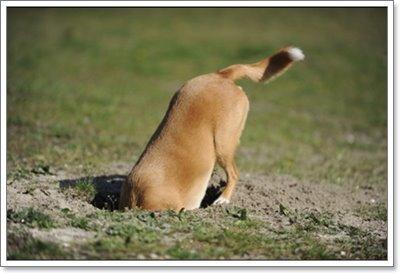 Dogilike.com :: น้องหมาชอบกินดิน ผิดปกติรึเปล่านะ? ไปตามหาคำตอบกัน