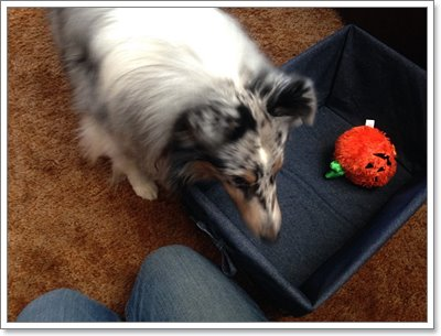 Dogilike.com :: 5 กิจกรรมหรรษา ชวนน้องหมาเล่นสนุกแถมได้ออกกำลังกายด้วย!