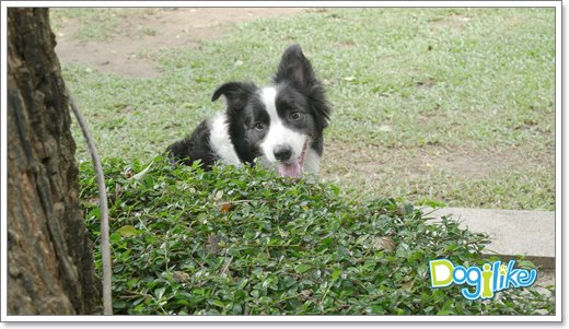 Dogilike.com :: Review :  DOG ROCKS at OZONO พื้นที่รวมความสุขของคนรักน้องหมา จักรยาน และกาแฟ