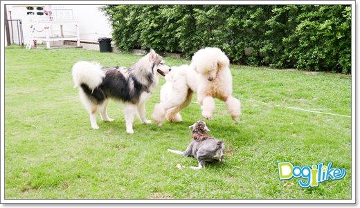 Dogilike.com :: Review : คาเฟ่น้องหมา Dog In Town เที่ยวบ้านหมาน่ารักกลางซอยเอกมัย