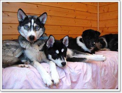 Dogilike.com :: เปิดประสบการณ์ใหม่ ทัวร์น้องหมาลากเลื่อน ที่อาร์กติก