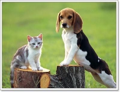 Dogilike.com :: 5 สายพันธุ์น้องหมาบำบัด ที่ทำให้คุณใจละลาย