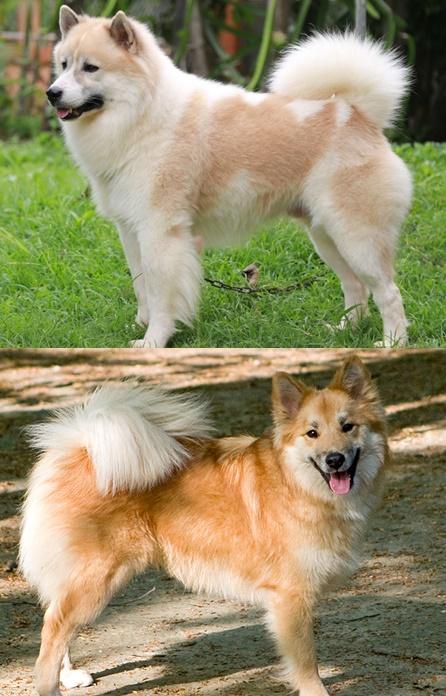 Dogilike.com :: ไขความลับ รู้ไหมน้องหมาหน้าเหมือนกันแต่ต่างสายพันธุ์ก็มีนะ!!