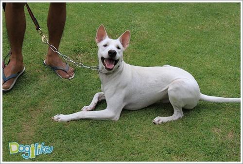 Dogilike.com :: เปิดใจรับน้องหมาตาบอดเข้าบ้าน ... เลี้ยงเขาให้มีความสุขได้ไม่ยากเลย