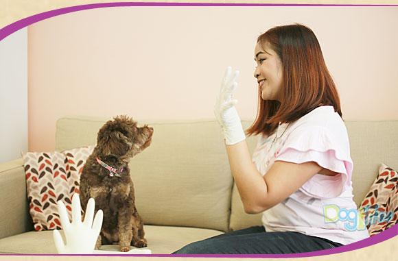 ถุงมือยาง, ถุงมือยางธรรมชาติ, I'm Glove, ไอเทมใหม่, ศรีตรัง, ใช้กรูมมิ่ง, ทำความสะอาดบ้าน, ใช้แทนฟองน้ำ, ปลอดภัยสำหรับหมา, สุนัข, หมา, ใส่สบาย, กระชับมือ, ถุงมือยางไม่มีแป้ง, แข็งแรง, ยืดหยุ่น, ทนทาน, ย่อยสบายได้, ปลอดภัยสำหรับอาหาร, ไม่ระคายเคืองผิว