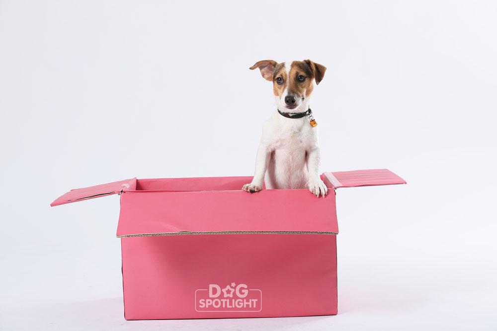 นัองหมา, สุนัข, Dog Spotligh, ถูกทิ้ง, วีรกรรมสุดแสบ, น้องหมาพันทาง, ซุป'ตาร์, แจ้งเกิด, ราฟาเอล, ไว้ท์ตี้ ,ไบเกอร์,Puppy Mills,JACK RUSSELL