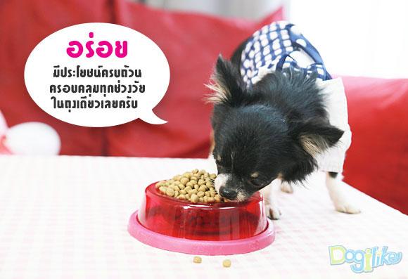 อาหารหมา, อาหารสุนัข, อาหารเกรดพรีเมียม, สุนัขพันธุ์เล็ก, หมาพันธุ์เล็ก, ครบทุกช่วงวัย, เพ็ทโต, ลูกสุนัข, ลูกหมา, หมาโต, หมาโตพันธุ์เล็ก, สุนัขโตพันธุ์เล็ก, petto, Petto, น้องหมาโตเต็มวัย, น้องหมาเด็ก, ครอบคลุมทุกวัย, หอมน่ากิน, เนื้อไก่แท้, ราคาไม่แพง, ราคาถูก, โปรตีนสูง, คุณภาพดี, อาหารอร่อย