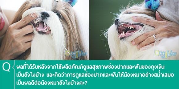 Tropiclean Drop, ทรอปิคลีน ดรอปส์, สุขภาพช่องปาก, ลมหายใจ, หอมสดชื่น, การดูแลฟัน, สุขภาพฟัน, หมา, สุนัข, ฟันสวย, ไม่มีคราบหินปูน, ไม่มีกลิ่นปาก, ดูแลช่องปาก, น้ำดื่ม, แบบน้ำ, หินปูน, แบคทีเรีย, ธรรมชาติ, มิ้นท์, ฟันสวย, ปากสะอาด