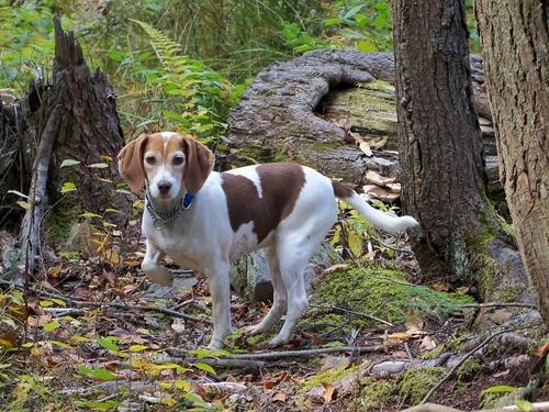 Dogilike.com :: เข้าใจปัญหาพฤติกรรมของ 3 สายพันธุ์น้องหมาสุดแสบ