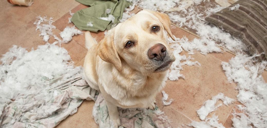 Dogilike.com :: 5 พฤติกรรมที่ทำให้ความสัมพันธ์ระหว่างคุณและน้องหมาต้อง พัง!!!!