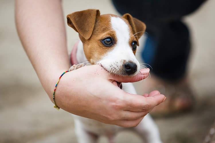 Dogilike.com :: 5 สัญญาณที่บอกว่า น้องหมากำลังเป็นเจ้านายคุณ