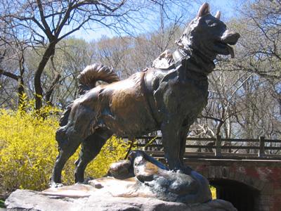 Dogilike.com :: เคยดูกันยัง? แอนิเมชันน้องหมายอดนักสู้ที่สร้างจากเรื่องจริง Balto