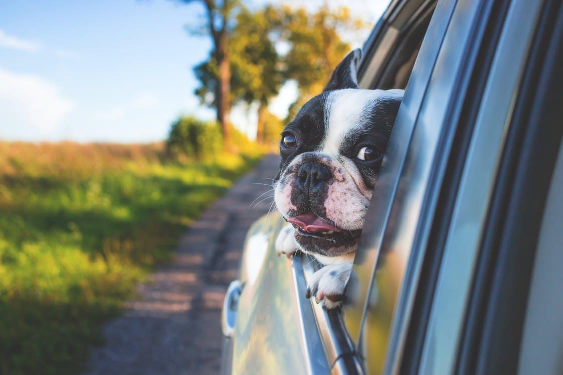 Dogilike.com :: หาที่ฝากน้องหมาก่อนไปเที่ยวปีใหม่ รวมรายชื่อโรงแรมสุนัข - สถานฝากเลี้ยง ...