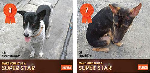 เชนการ์ด, Chaingard, Make Your Dog A Super Star, สุนัขจรจัด, โครงการดีๆจากเชนการ์ด, แคมเปญ, แชมพูอาบน้ำเชนการ์ด, แปลงโฉมน้องหมาจรจัด