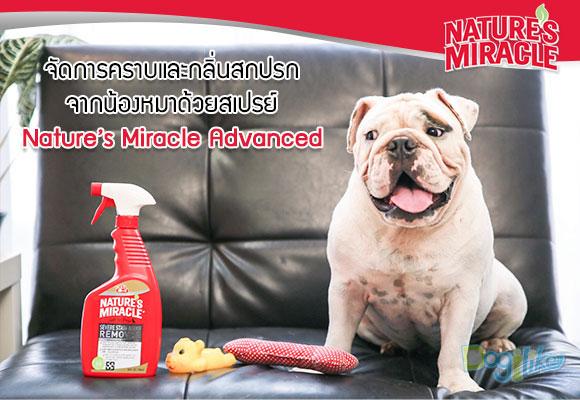 Nature�s Miracle Advanced, Shawpet, ชอว์เพ็ท, เนเจอร์มิราเคิล, สเปรย์ขจัดคราบและกลิ่นสุนัข, คราบสกปรก, กลิ่นที่ฝังลึก, เอนไซน์ชีวภาพ, ขจัดคราบอาหาร, ขจัดคราบอาเจียน, ขจัดคราบอุจจาระ, ขจัดคราบปัสสาวะ, ขจัดคราบไขมัน, ขจัดคราบเลือด