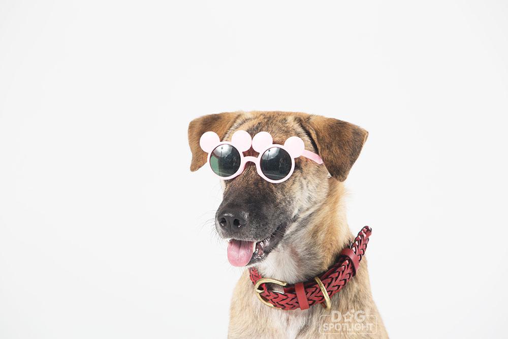 นัองหมา, สุนัข, Dog Spotligh, ถูกทิ้ง, วีรกรรมสุดแสบ, น้องหมาพันทาง, ซุป'ตาร์, แจ้งเกิด, กระสอบ