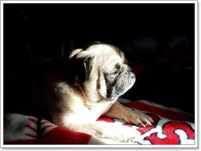 Dogilike.com :: ไขสงสัย! ทำไมน้องหมากินน้อยลงในหน้าร้อน