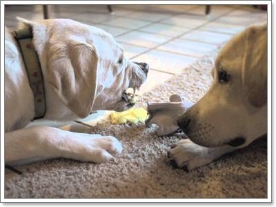 Dogilike.com :: รวมเหตุการณ์ไม่คาดฝัน! อาจเกิดขึ้นกับน้องหมาในหน้าฝน