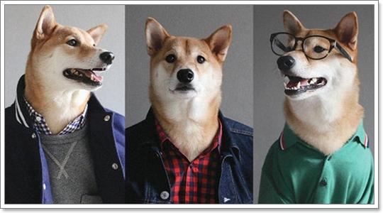 Dogilike.com :: 10 สิ่งที่น้องหมาทำแล้วอาจโด่งดังชั่วข้ามคืน!
