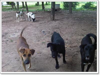 Dogilike.com :: ประเด็นดราม่า!  วัดไม่รับเลี้ยงน้องหมาถูกทิ้งผิดหรือ?
