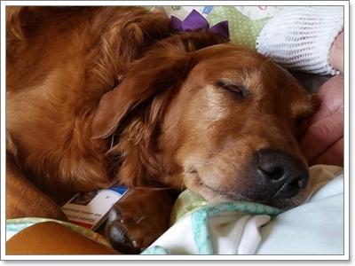 Dogilike.com :: เวลาเราเศร้าเสียใจ ทำไมน้องหมาถึงรู้ว่าต้องอยู่เคียงข้าง