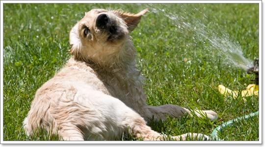 Dogilike.com :: เทคนิคง่าย ๆ คลายเครียดน้องหมาในหน้าร้อน