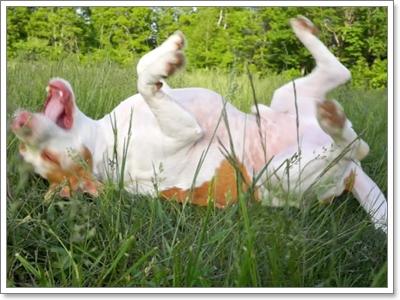 Dogilike.com :: 4 พฤติกรรมน้องหมาทำความสะอาดร่างกายได้ด้วยตัวเอง