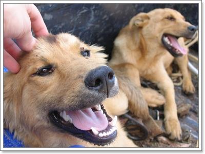 Dogilike.com :: 5 สุดยอดกลยุทธ์ หลอกน้องหมาอาบน้ำให้สำเร็จ