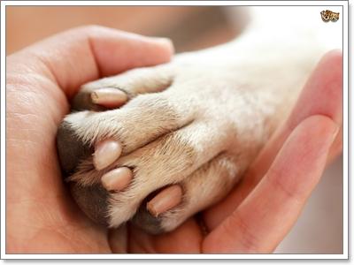 Dogilike.com :: น้องหมาแทะเท้าเกิดจากอะไร อันตรายแค่ไหน รับมืออย่างไรดี?