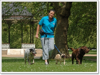 Dogilike.com :: 7 กิจกรรมสนุก ๆ ที่น้องหมาทำแล้วฉลาดเวอร์!
