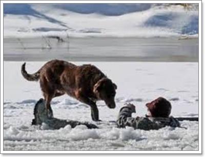 Dogilike.com :: เจาะลึกหัวใจน้องหมา ทำไมถึงซื่อสัตย์กับมนุษย์มากที่สุด