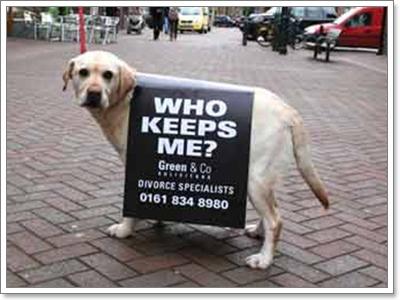 Dogilike.com :: เมื่อน้องหมาตกที่นั่งลำบาก พ่อแม่เลิกกัน ต้องทำอย่างไร