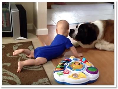 Dogilike.com :: 10 พฤติกรรมสุดน่ารัก เห็นแล้วอดถ่ายคลิปเก็บไว้ไม่ได้