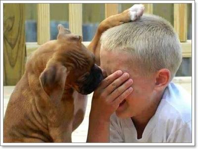 Dogilike.com :: 10 สัญญาณน้องหมาบอกว่า จะภักดีเราจนวันสุดท้ายของชีวิต