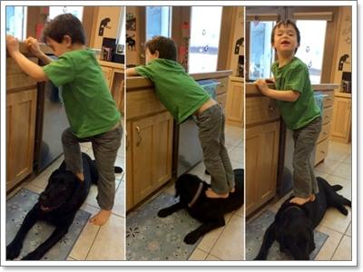 Dogilike.com :: ความจริงน่าเศร้า! ของน้องหมาที่ถูกทำโทษมาตลอดชีวิต