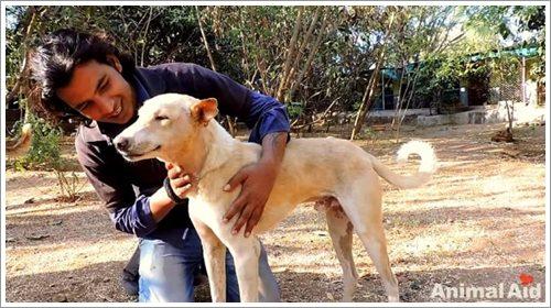 Dogilike.com :: ปลื้มน้ำใจ! สุนัขใบหน้าบวมคล้ายหมู ถูกช่วยเหลือจนหายดี