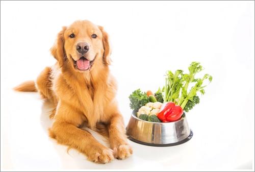 Dogilike.com :: ทริคเด็ดให้อาหารเจ้าตูบยังไงให้ลดความเสี่ยงเป็นโรคมะเร็ง !!