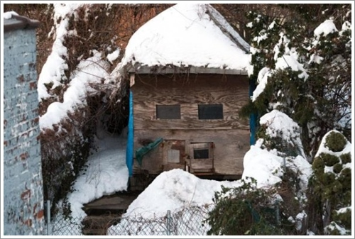 Dogilike.com :: แชร์สนั่น! คลิปเจ้าของมะกันทิ้ง 2 พิทบูลไว้นอกบ้านขณะพายุหิมะถล่ม