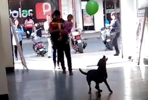 Dogilike.com :: คลิปเจ้าตูบโชว์เทพ! ลีลาเดาะลูกโป่งที่มียอดผู้ชมกว่า 1 ล้านครั้ง