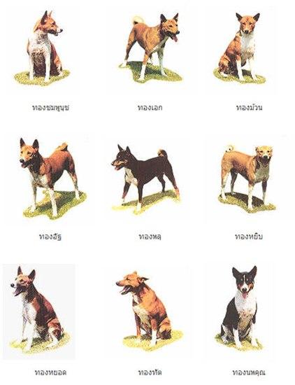 Dogilike.com :: เปิดประวัติ คุณทองแท้ สุนัขคู่ครอง คุณทองแดง สุนัขทรงเลี้ยงในหลวง ร.9