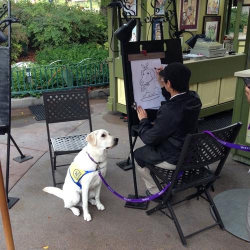 Dogilike.com :: อดยิ้มไม่ได้! สุนัขช่วยเหลือฝึกงานในดิสนีย์แลนด์ นั่งนิ่งฝึกสมาธิให้ศิลปินวาดรูป