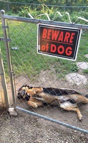 Dogilike.com :: เจอแบบนี้กลัวดีมั้ย? รวมภาพ ป้ายระวังหมาดุ ที่อาจทำให้คุณตกหลุมรัก