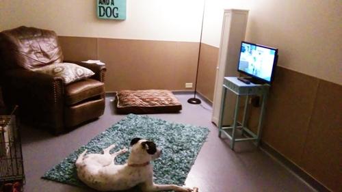 Dogilike.com :: ศูนย์พักพิงฯ ปิ๊งไอเดียจัดห้องให้สุนัขรู้สึกอบอุ่นเหมือนอยู่บ้าน ระหว่างรอรับเลี้ยง !!