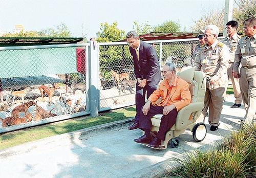 Dogilike.com ::  4 วิธีเลี้ยงสุนัขอย่างรับผิดชอบ ตามรอยในหลวงรัชกาลที่ 9