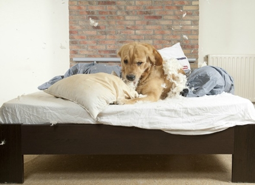 Dogilike.com :: เทคนิคเลี้ยงน้องหมายังไงไม่ให้กลายร่างเป็นสัตว์อื่น