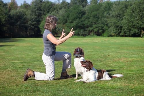 Dogilike.com :: 4 เคล็ดลับเลี้ยงน้องหมาอย่างไร ให้นำโชคมาให้เจ้าของ